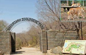 Image Of Nahargarh Zoological Park, Rajasthan